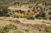 9011, Land with olive trees in Lefkes, for sale
