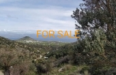 13002, Lefkes olive grove for sale